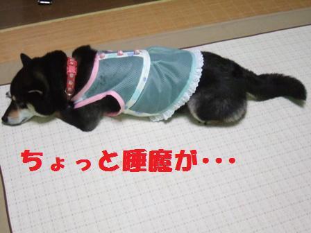 blog3975.jpg