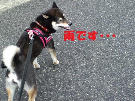 blog3981.jpg