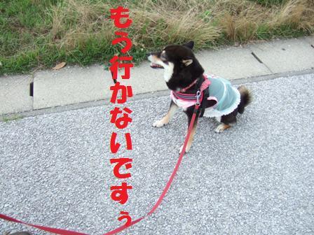 blog3984.jpg