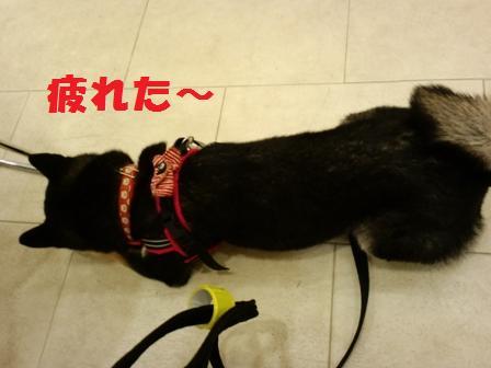 blog4066.jpg