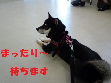 blog4132.jpg