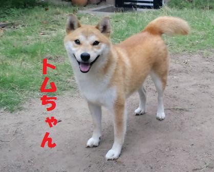 blog4246.jpg