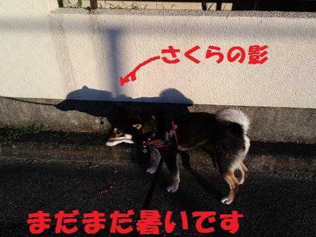 blog4247.jpg
