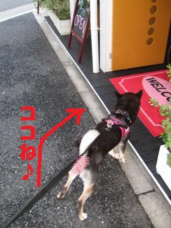 blog4260.jpg
