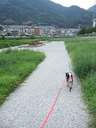 blog4268.jpg