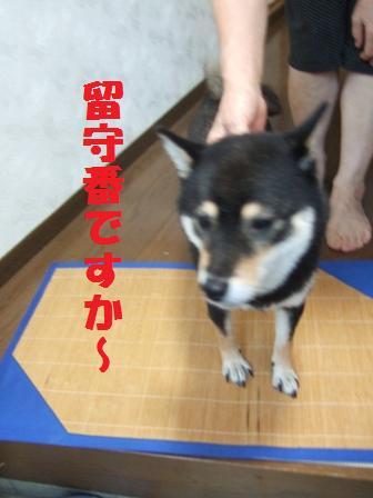 blog4285.jpg