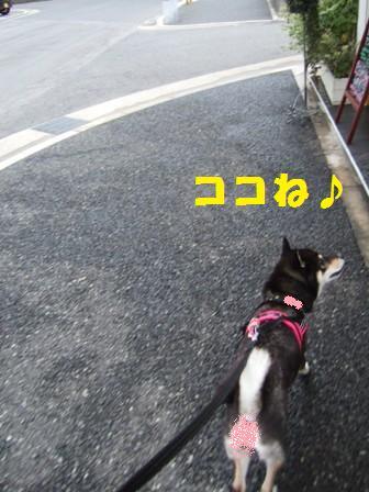 blog4339.jpg