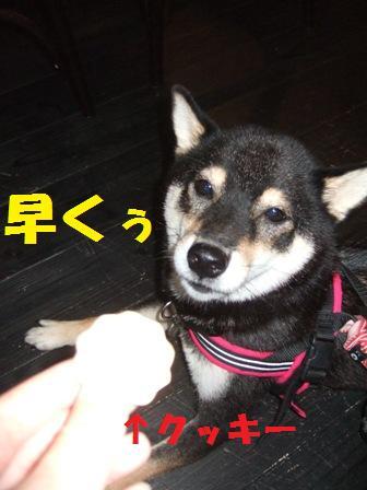 blog4344.jpg