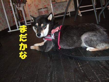 blog4345.jpg