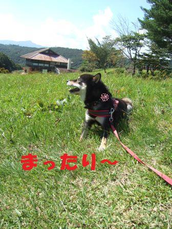 blog4372.jpg