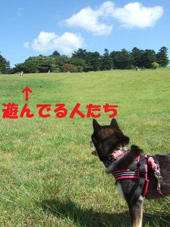 blog4375.jpg
