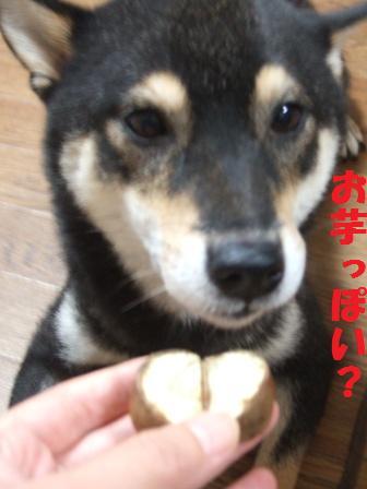 blog4388.jpg