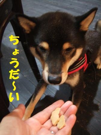 blog4431.jpg