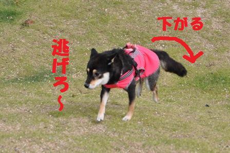 blog4493.jpg