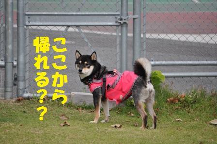 blog4494.jpg