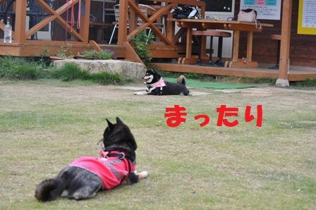blog4495.jpg