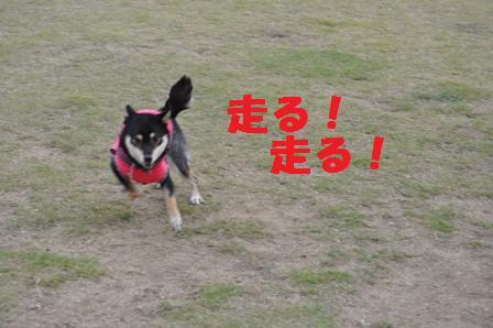 blog4497.jpg