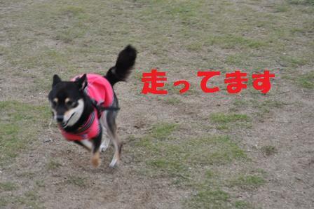 blog4498.jpg