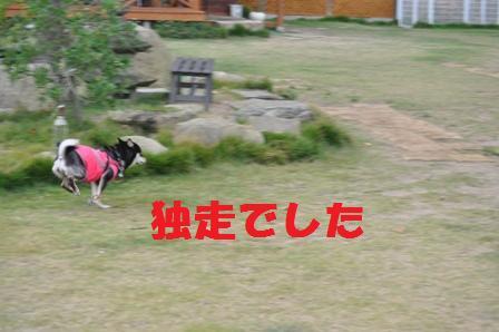 blog4502.jpg