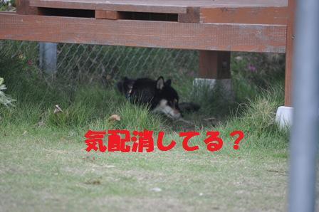 blog4508.jpg