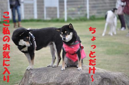 blog4511.jpg