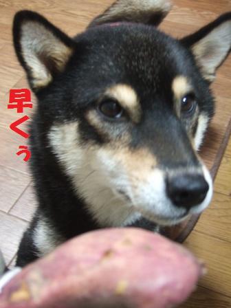 blog4552.jpg