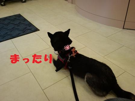 blog4569.jpg