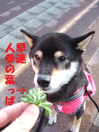 blog4637.jpg