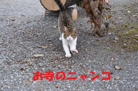 blog4644.jpg