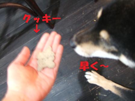 blog4697.jpg