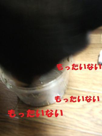 blog4729.jpg