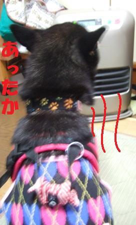 blog4838.jpg