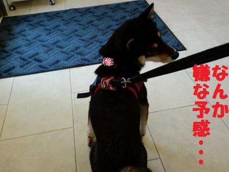 blog4856.jpg