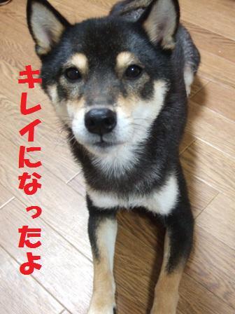 blog4860.jpg