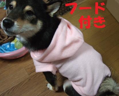 blog4895.jpg
