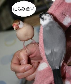 20121118_2908.jpg