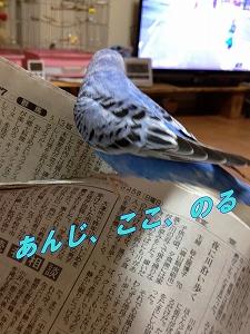 s-IMG_1890.jpg