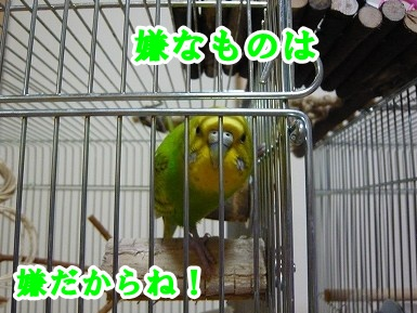 s-P1080044.jpg