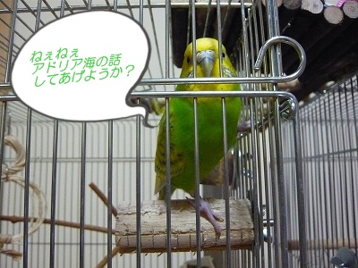 s-P1080045.jpg