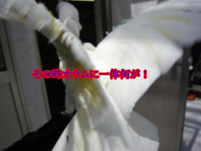 s-P1080300.jpg
