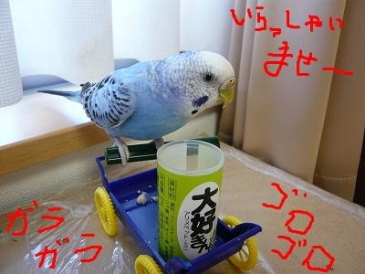 s-P1080374.jpg