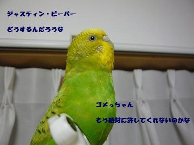 s-P1100553.jpg