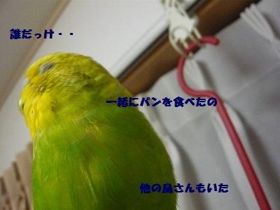 s-P1100555.jpg