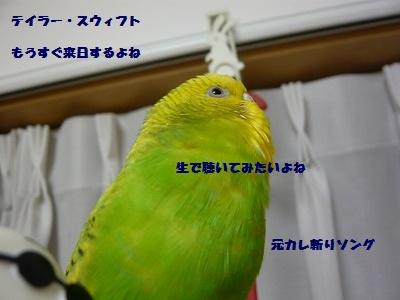 s-P1100557.jpg