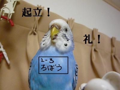s-P1100949.jpg