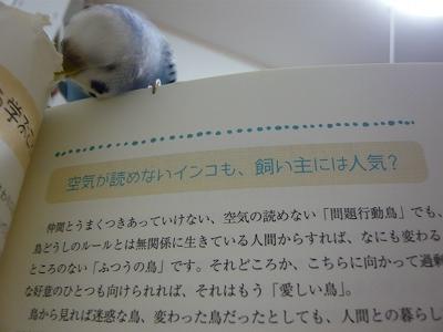 s-P1110989.jpg