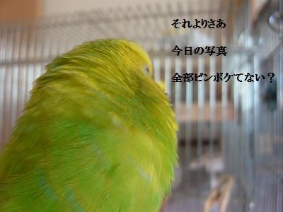 s-P1130872.jpg