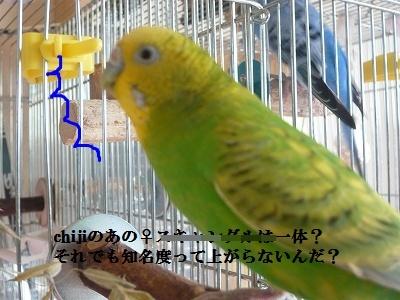s-P1130883.jpg