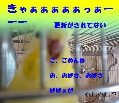 s-P1140175.jpg