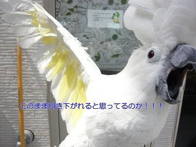 s-torimura7.jpg
